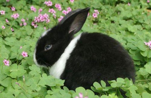 兔子的故事儿童故事